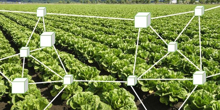 Blockchain Agroalimentare Mv Consulting