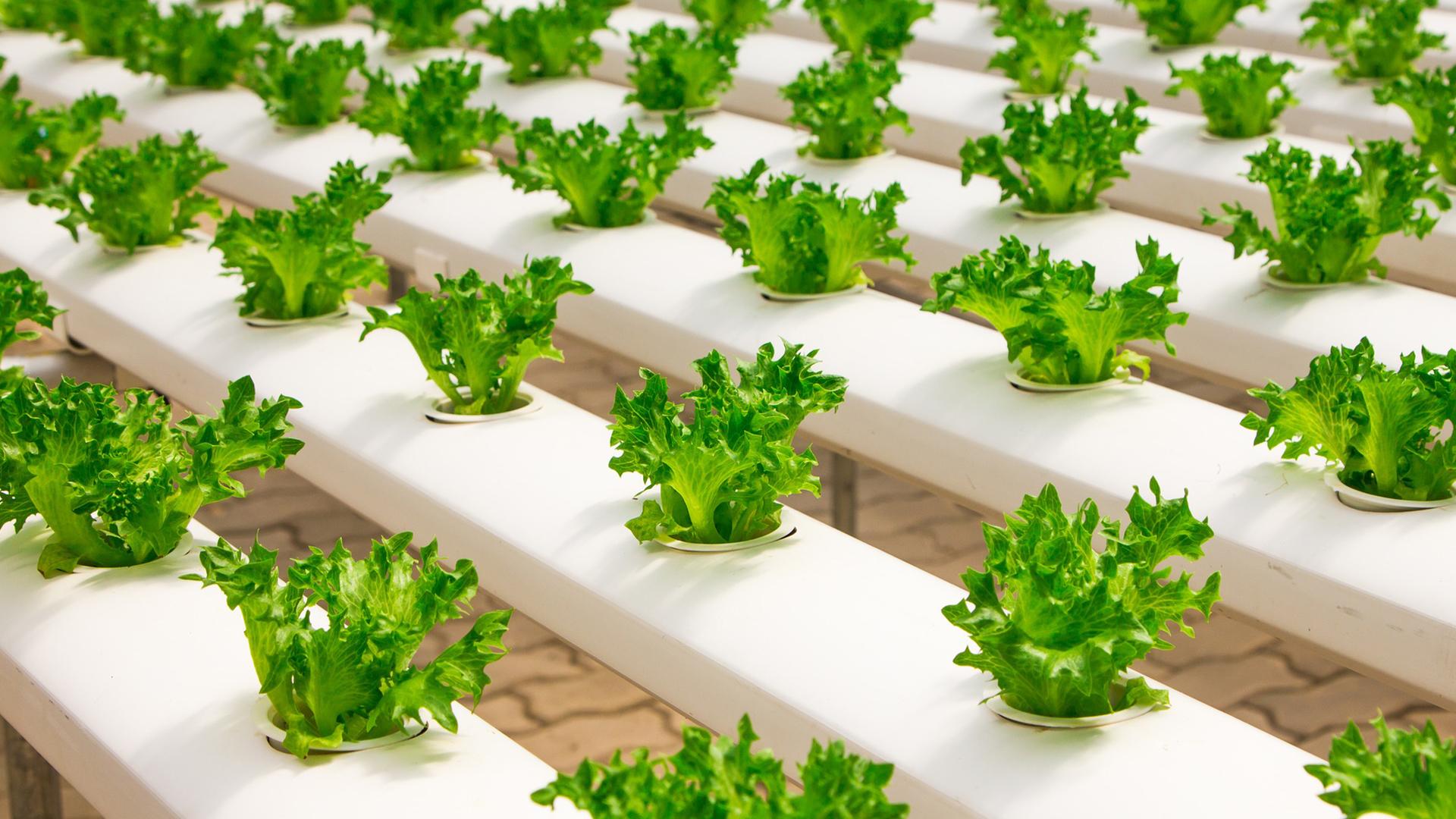 Delnas Articolo Food Defence