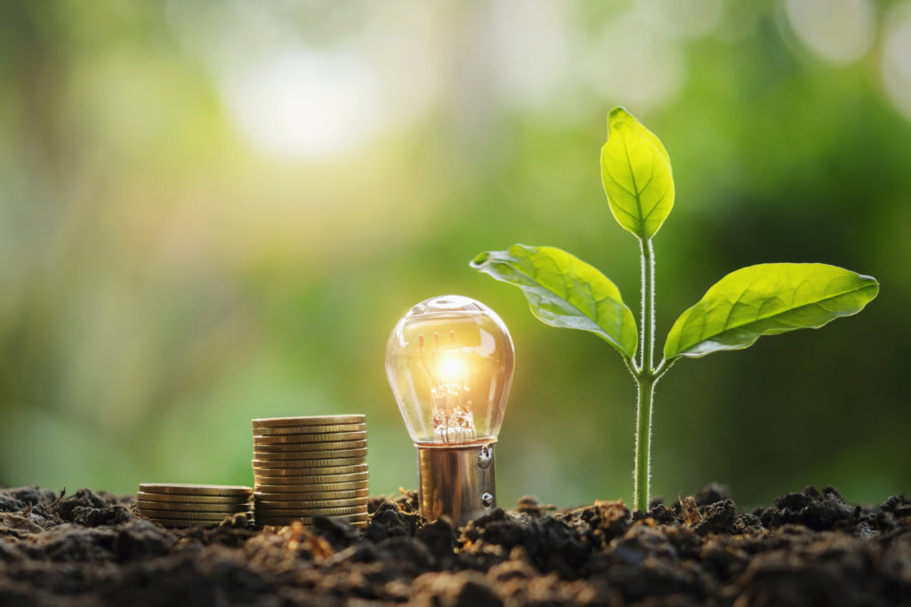 Lightbulb Money Stack And Young Plant In Nature. Idea Saving Ene